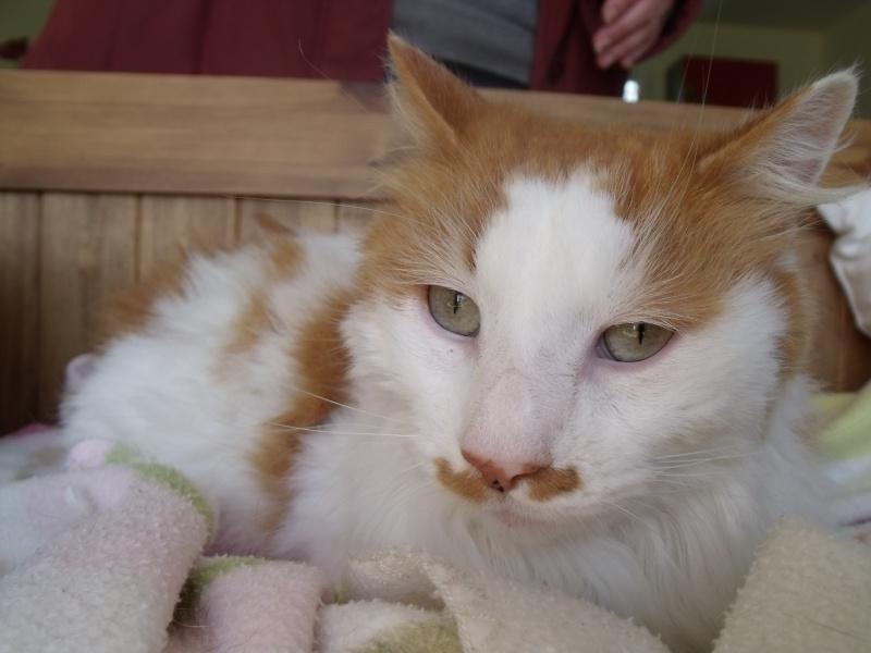 EZZIO - roux et blanc poils longs - 01/2008 Dscf7934