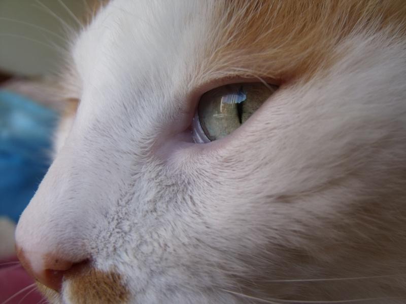 EZZIO - roux et blanc poils longs - 01/2008 Dscf7935