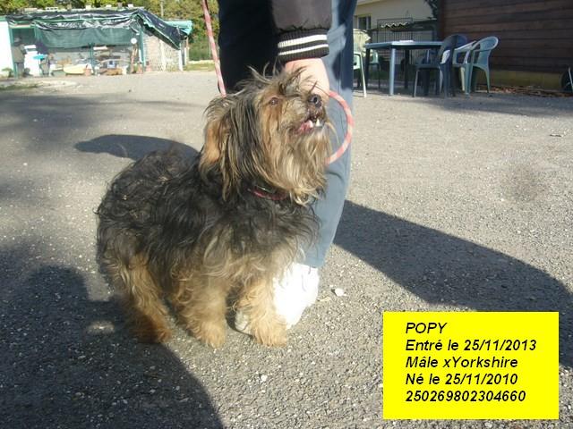 POPY xYorkshire 250269802304660 P1190415