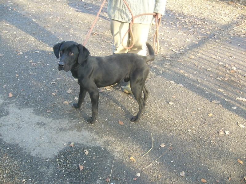 Labrador noir 250269802285137 P1190719