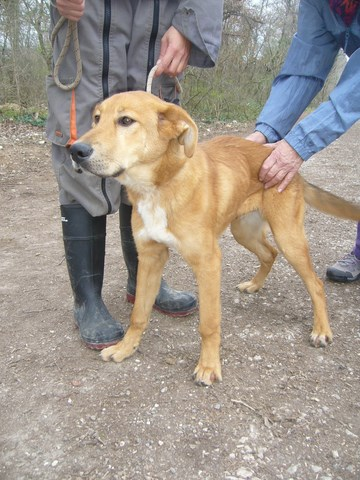 IGOR Labrador 250269802276207 Pic02111