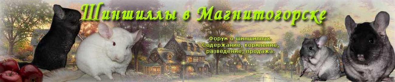 Шиншиллы в Магнитогорске