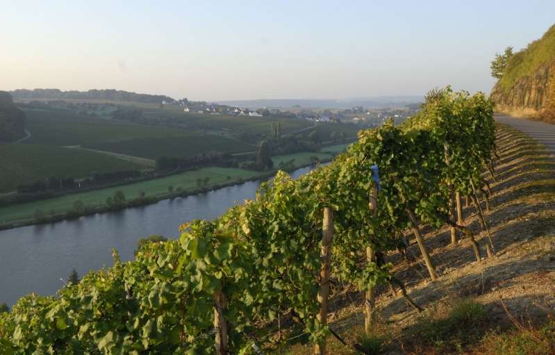 projet d'excursion en moselle luxembourgeoise - Page 11 Zoom-110