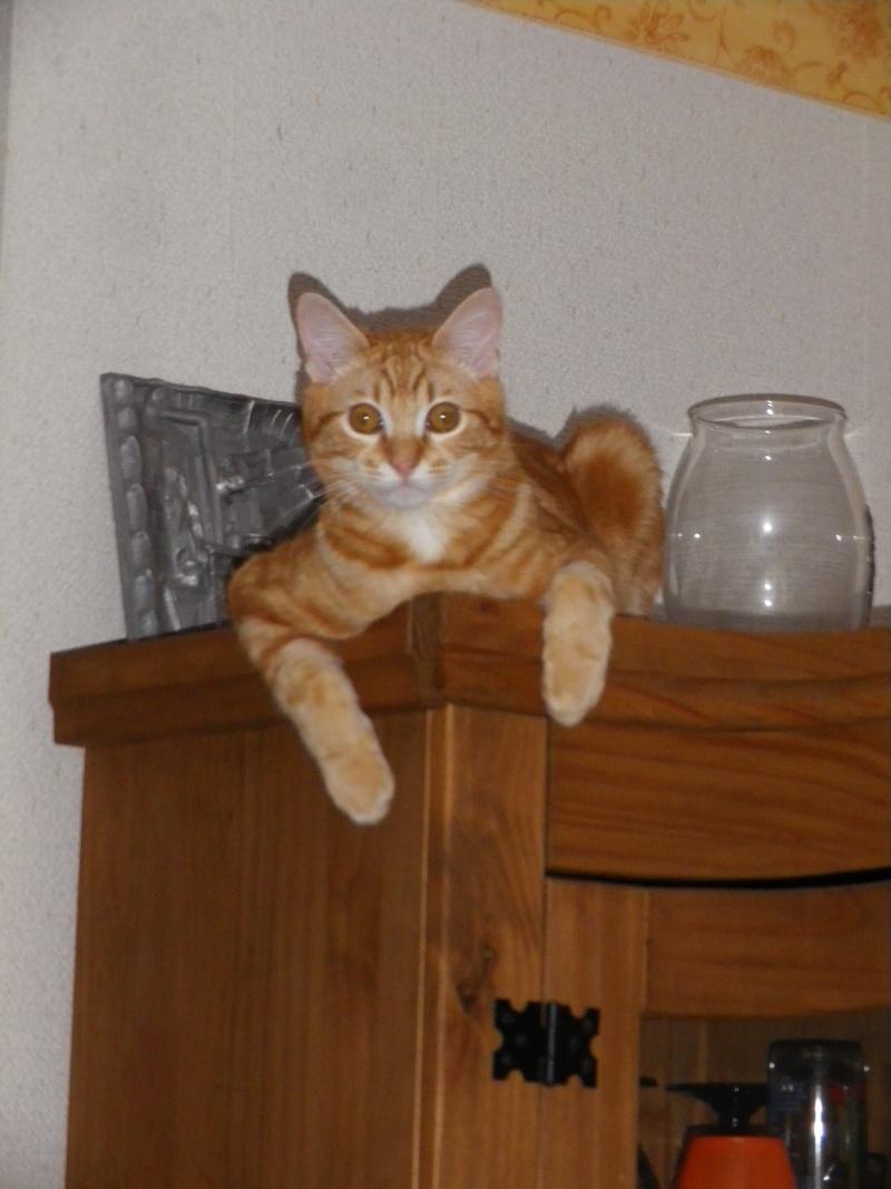 quelqu'un peut-il retrouver mon chat ? Cartoo10