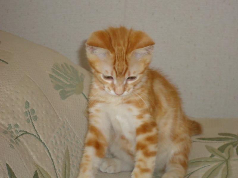 quelqu'un peut-il retrouver mon chat ? Cartoo12