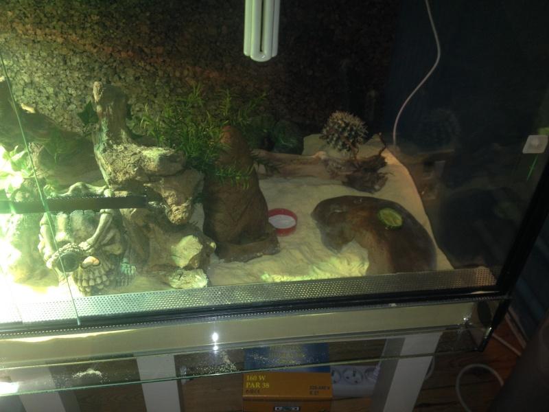 geckos ne mangent pas Img_0212