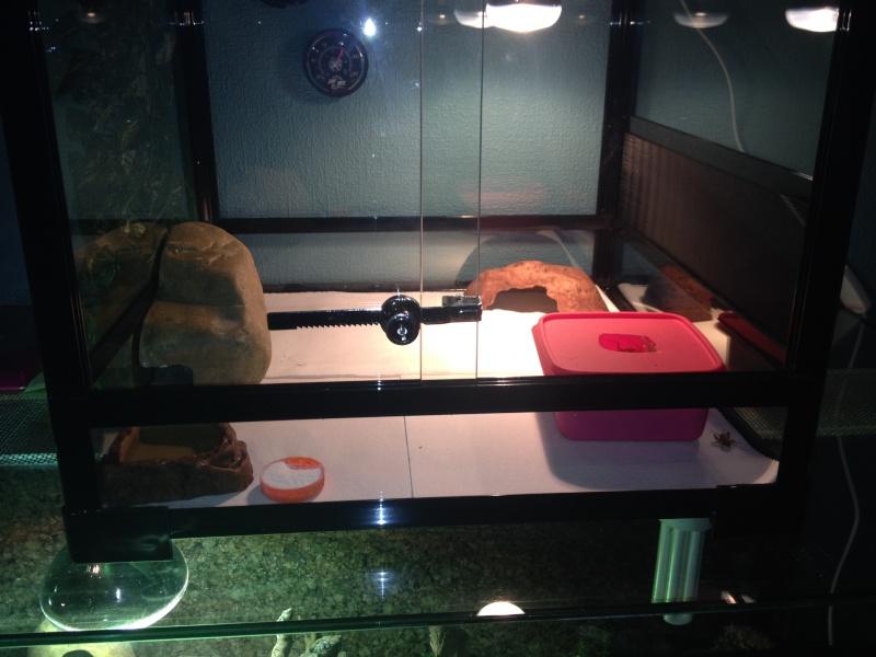 geckos ne mangent pas Img_0213