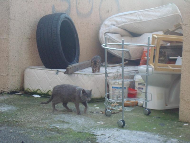 chats en grand danger sur un site de démollition : les pelleteuses sont là ! (78) 0071010