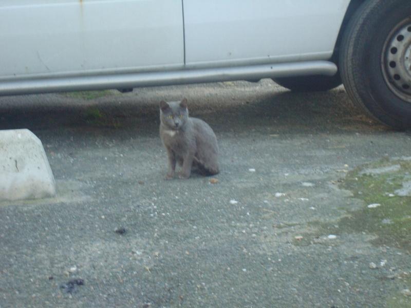 chats en grand danger sur un site de démollition : les pelleteuses sont là ! (78) 0151010