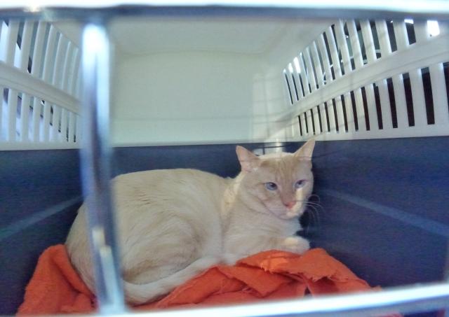 Photos des chats sauvés, avant/après - Page 3 13783210