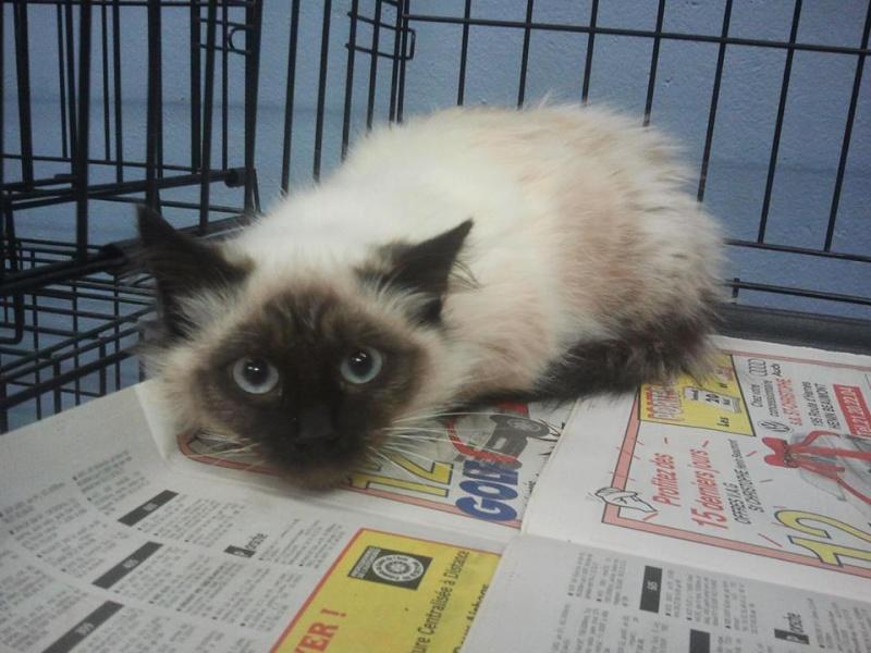 Photos des chats sauvés, avant/après - Page 2 13938210