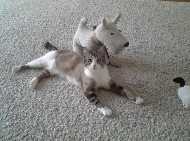 Photos des chats sauvés, avant/après - Page 3 13972910