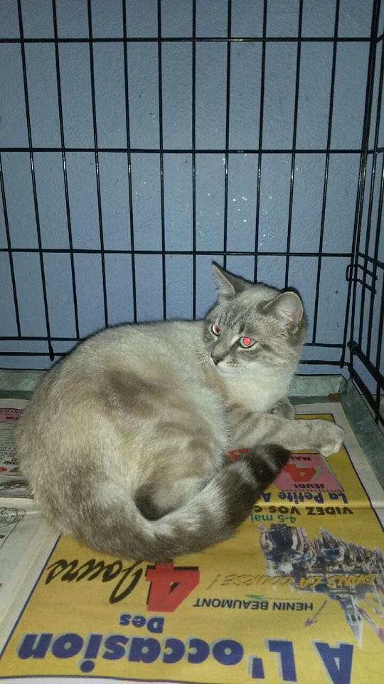 Photos des chats sauvés, avant/après - Page 3 14638811