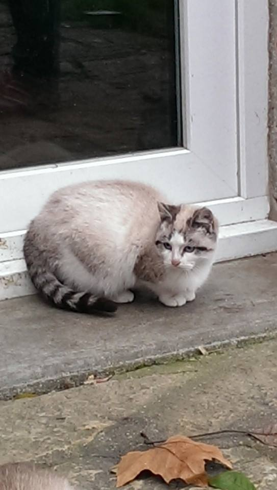 Photos des chats sauvés, avant/après - Page 4 14850710