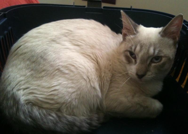Photos des chats sauvés, avant/après - Page 3 Cherub10