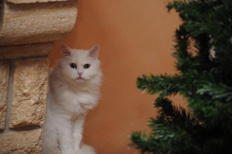 Photos des chats sauvés, avant/après - Page 2 Dsc_0510