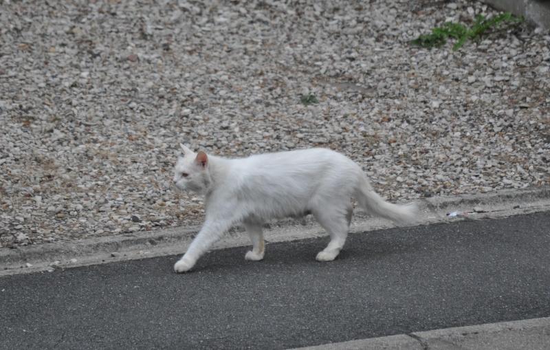 Photos des chats sauvés, avant/après - Page 2 Dsc_0910