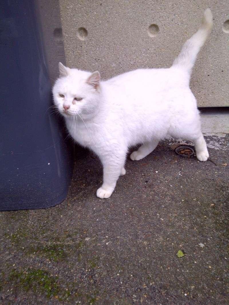 chats en grand danger sur un site de démollition : les pelleteuses sont là ! (78) Img-2010