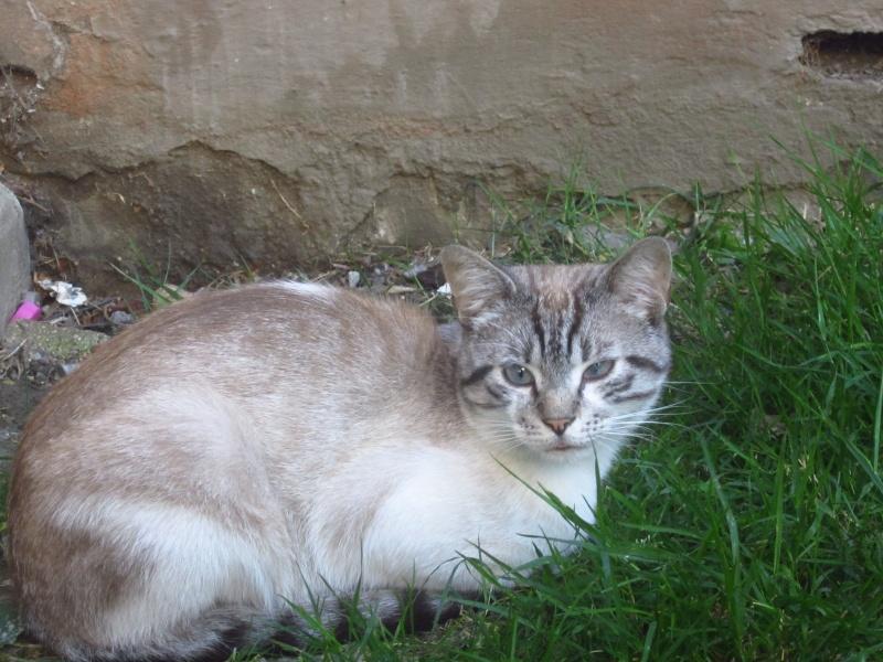 Photos des chats sauvés, avant/après - Page 2 Img_1611