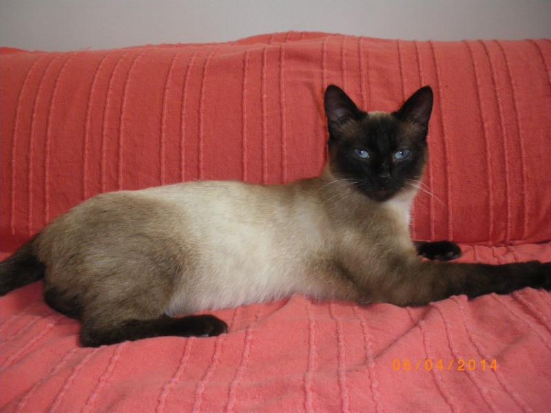Photos des chats sauvés, avant/après - Page 4 Imgp1110