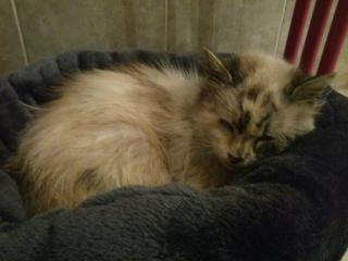 Photos des chats sauvés, avant/après - Page 4 Mms_im10
