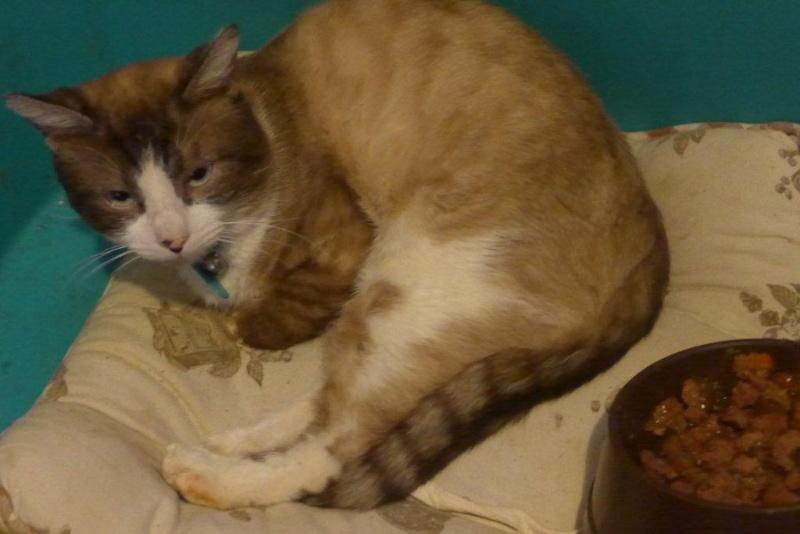 Photos des chats sauvés, avant/après - Page 4 P1010510