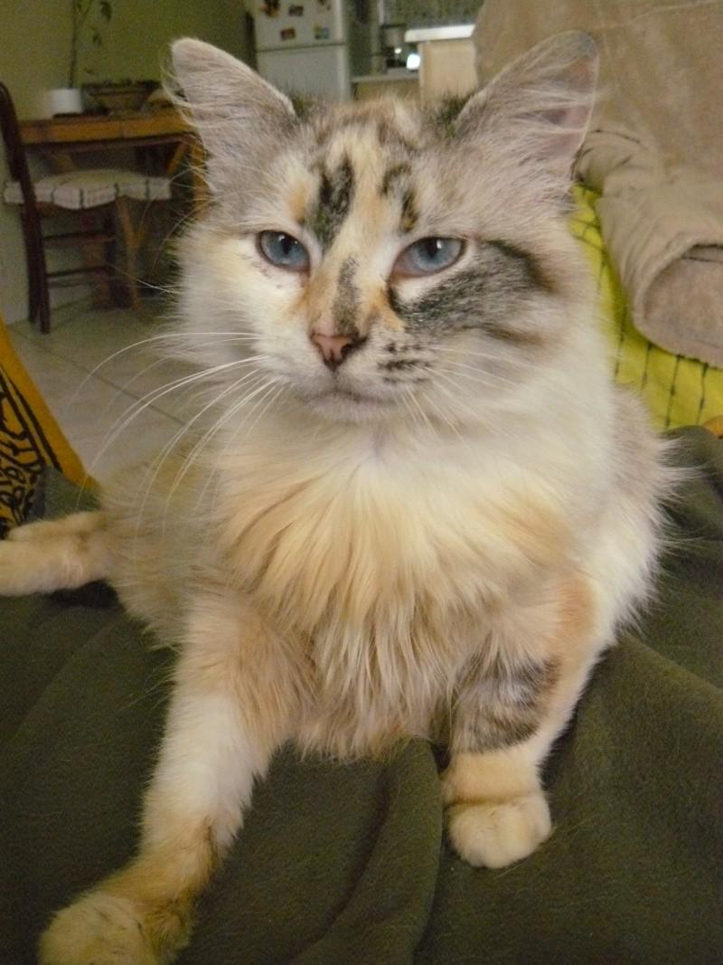 Photos des chats sauvés, avant/après - Page 4 P1100010