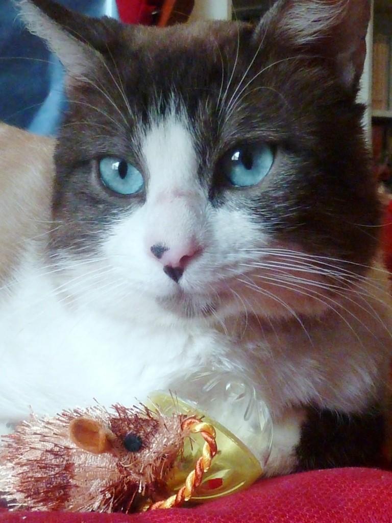 Photos des chats sauvés, avant/après - Page 4 P1200710