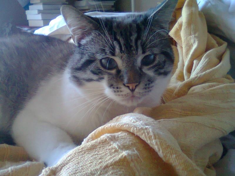 Photos des chats sauvés, avant/après - Page 2 Photo110