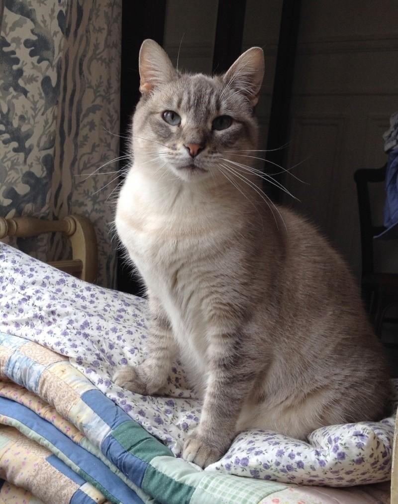 Photos des chats sauvés, avant/après - Page 4 Photo111