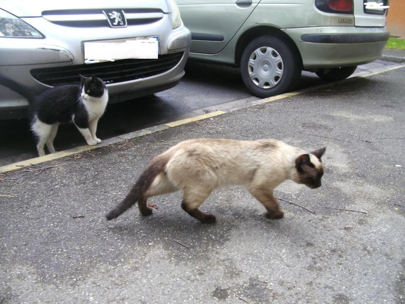 Photos des chats sauvés, avant/après - Page 2 Photo_12