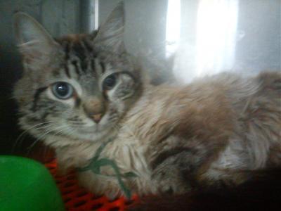Photos des chats sauvés, avant/après - Page 4 Tabby_10