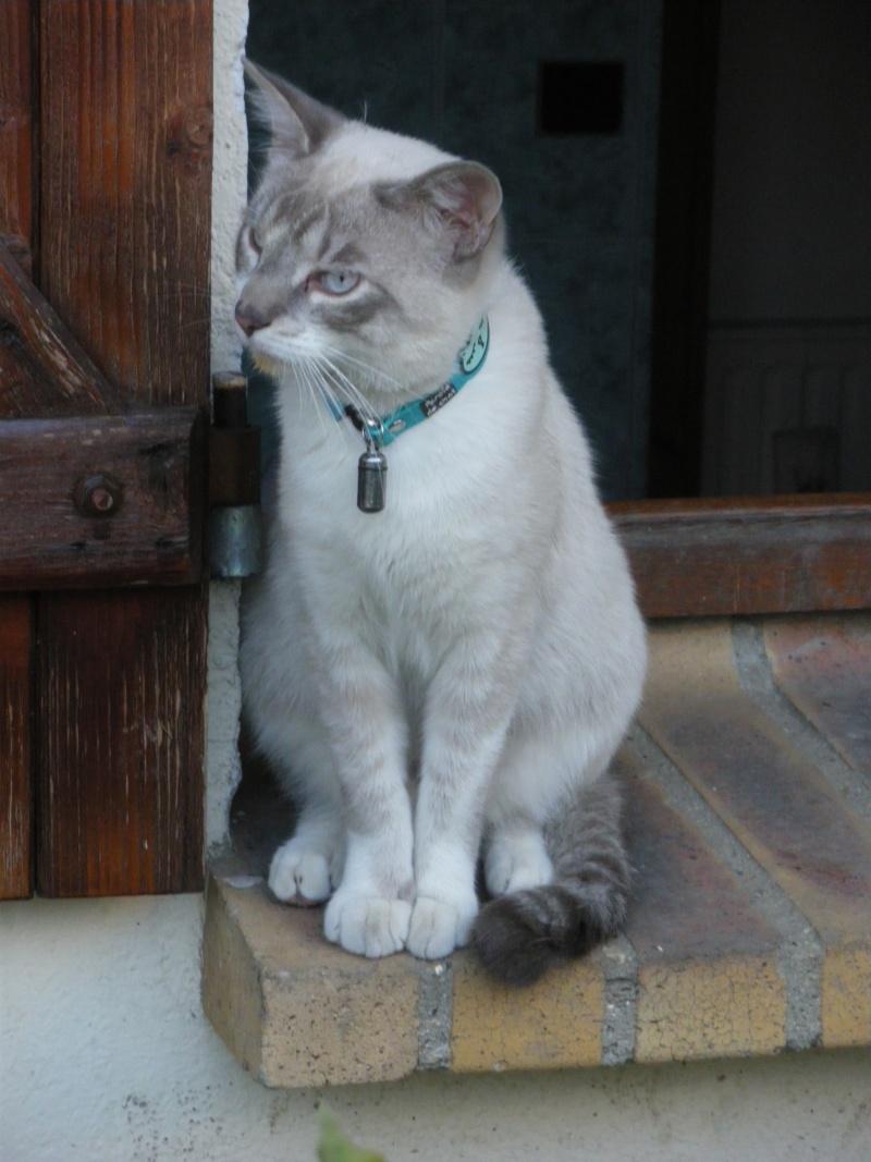 Photos des chats sauvés, avant/après - Page 3 Uri_0010