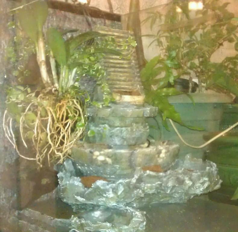 Orchidarium dans un aquarium Gauche10