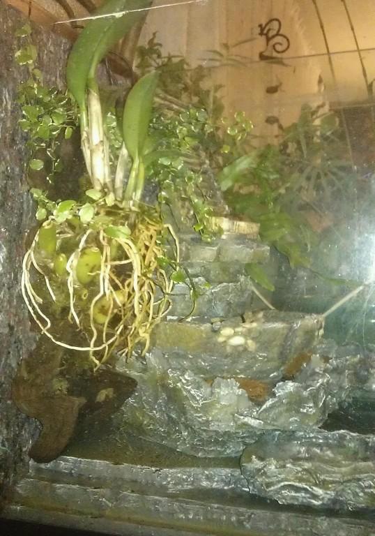 Orchidarium dans un aquarium Gauche11