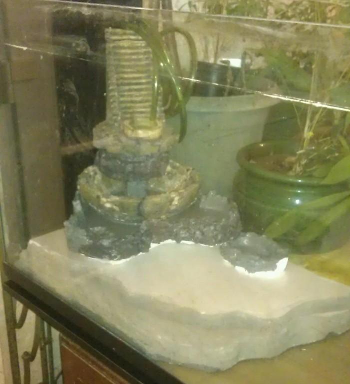Orchidarium dans un aquarium Plage211