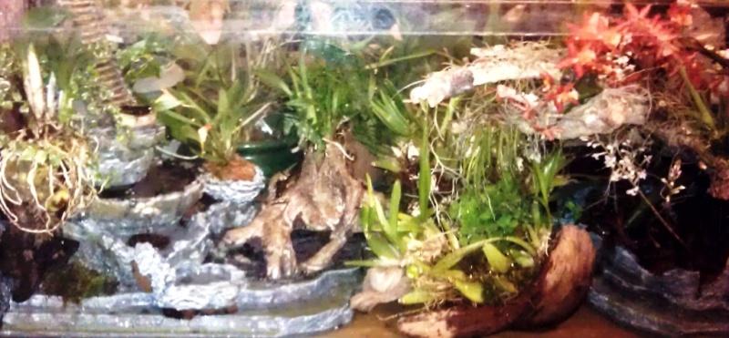 Orchidarium dans un aquarium Planta10