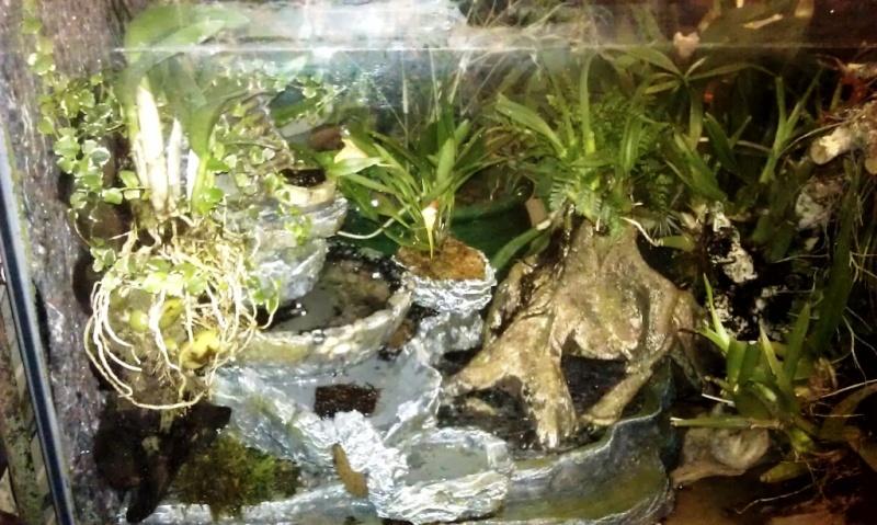 Orchidarium dans un aquarium Planta11