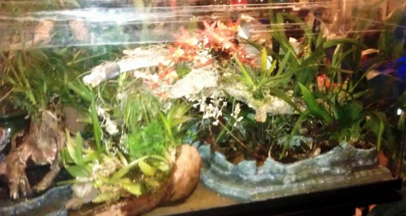 Orchidarium dans un aquarium Planta12