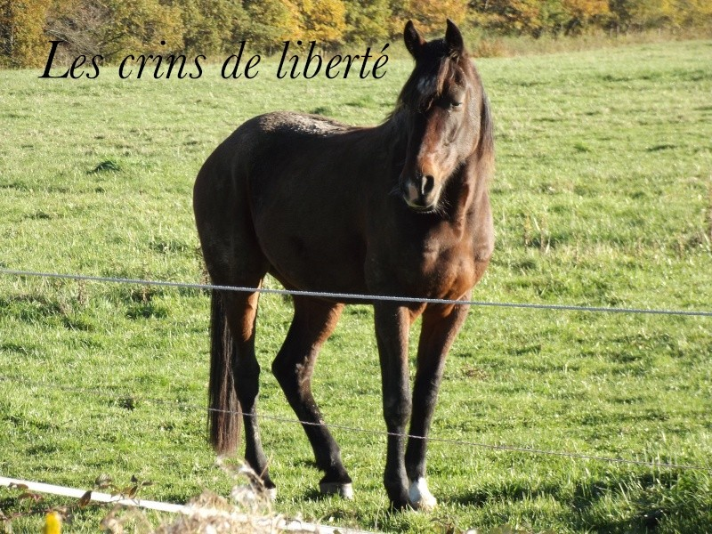 Un de Clerlande, TF et Émilie (Mars 2014) - Page 6 Un_de_10