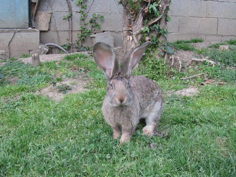 Voici mes deux nouvelles lapines Lapin_10
