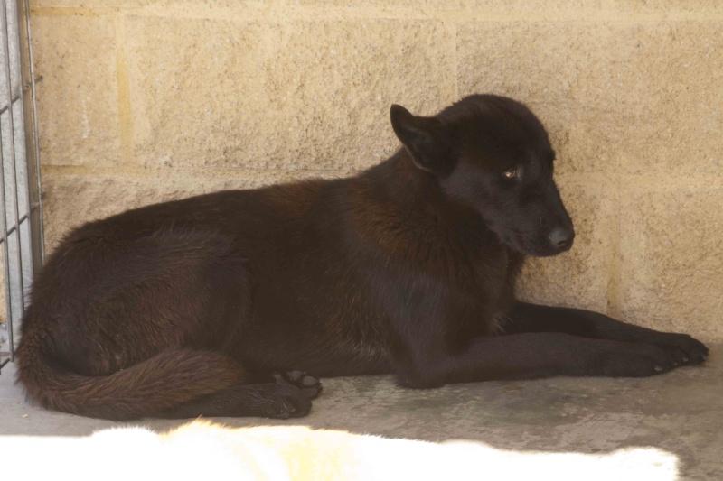 TIARA  belle louloute noire  - En FA en Haute-Savoie _mg_1210