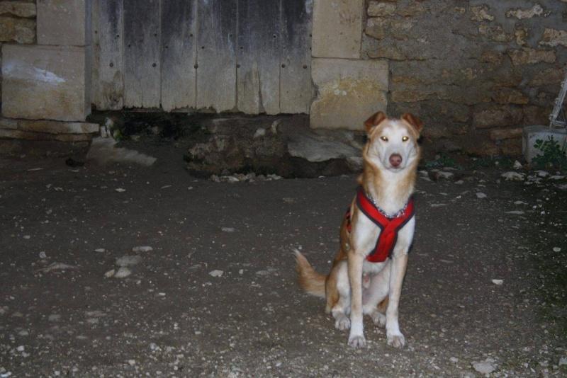 CARLITOS    EUTHANASIE PREVUE  HELP   :::::pris refuge gratouille Carlit10