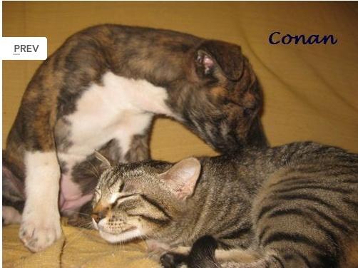 CONAN - TOUT PATAUD Conan11