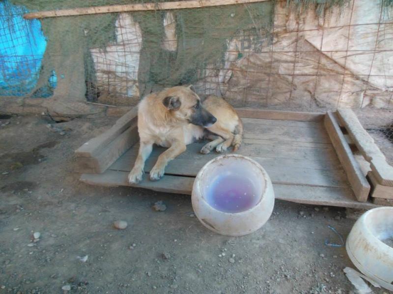 Nana, mère des chiots des ruines, 6 ans - Adoptée ! 13919110