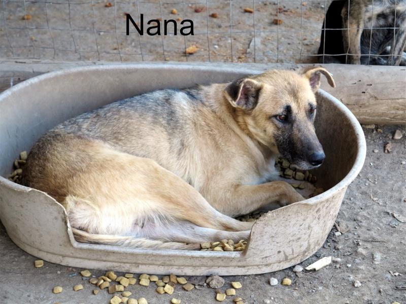 Nana, mère des chiots des ruines, 6 ans - Adoptée ! 68040010