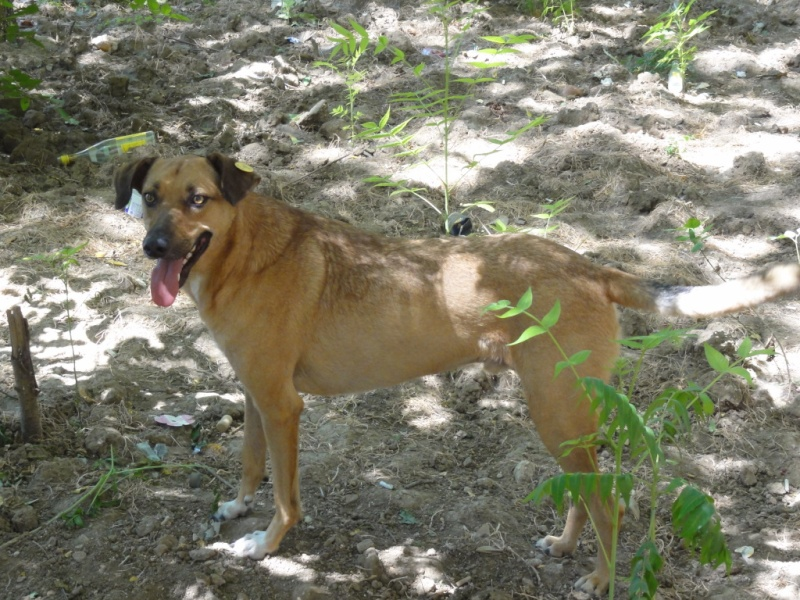 Tzupy, chien de notre quartier, mâle très sociable, né en 2009. Dsc09513