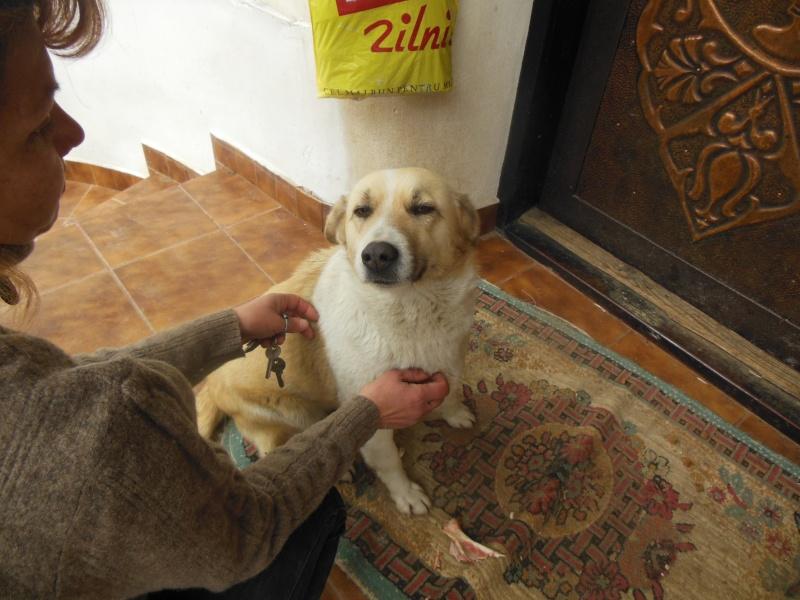 Murmurica, sauvetage de Sanda, chienne née en 2011 Dscn2813