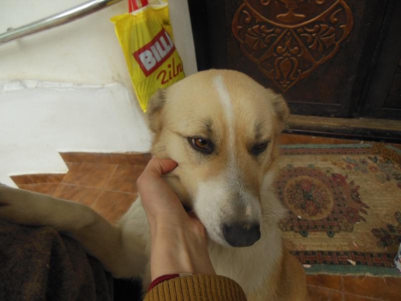 Murmurica, sauvetage de Sanda, chienne née en 2011 Dscn2816