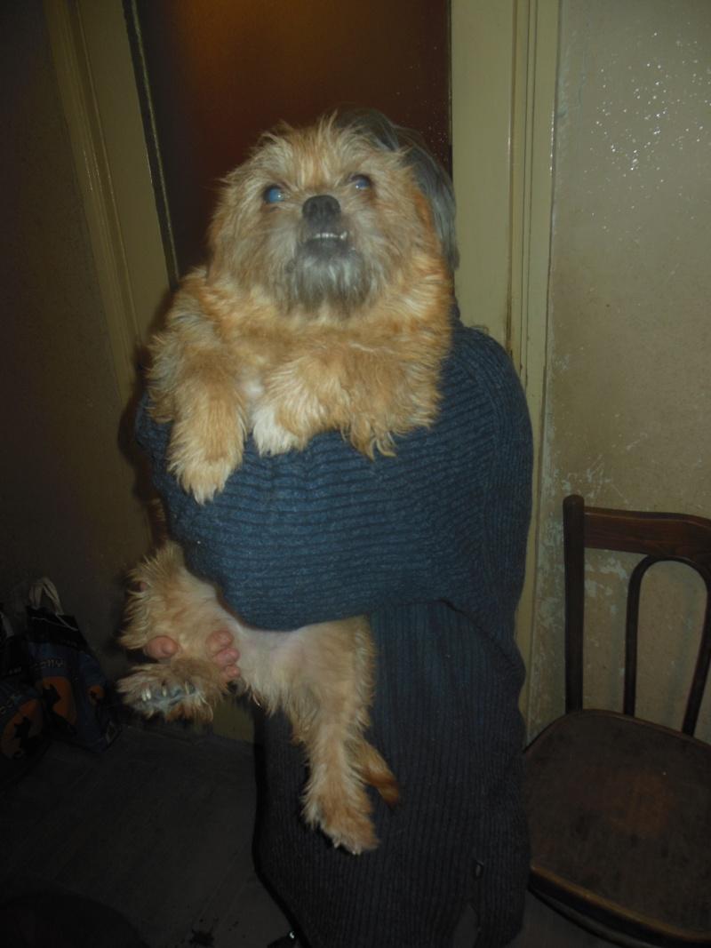 Yvona, née en 2011, petit modèle, chienne super sage Dscn4515